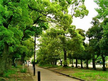 【中原平和公園】 風薫る5月、心に肺にたっぷりの清浄な空気を感じましょう♪